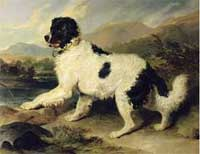 Sir Edwin Henry Landseer's painting of a Newfoundland Dog called Lion